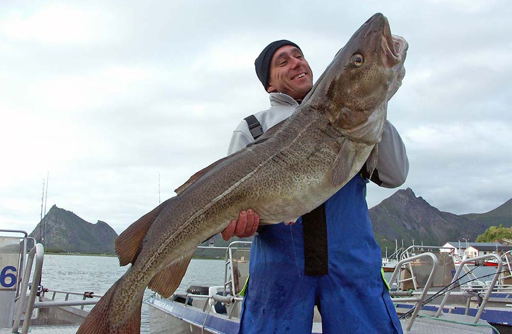 Adventurous Arctic Cod Fishing in Steigen